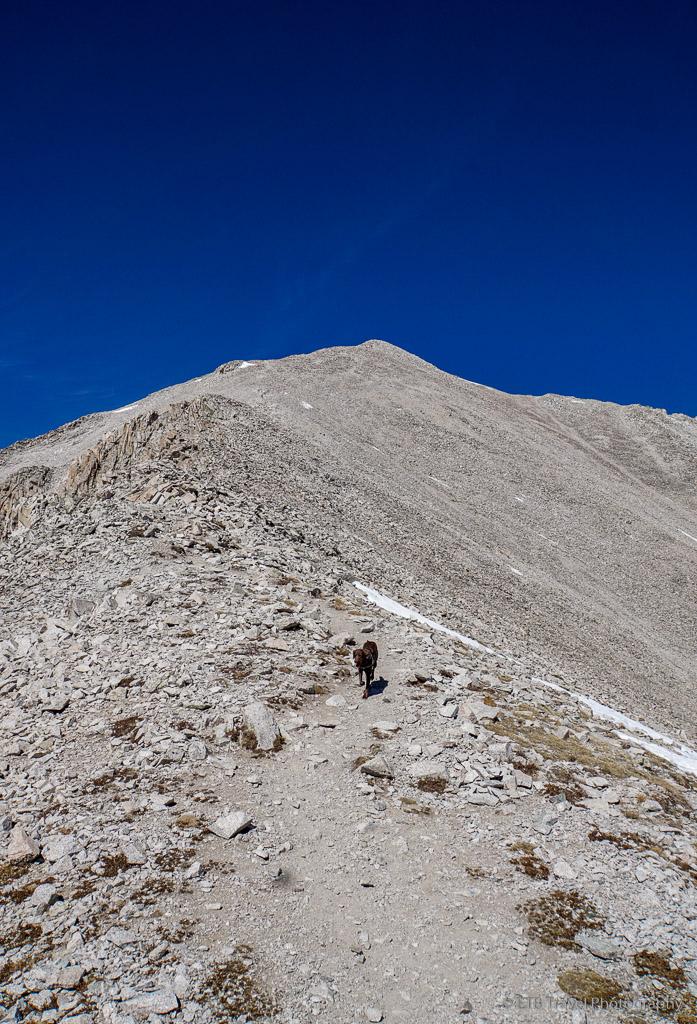 keely on the ridge