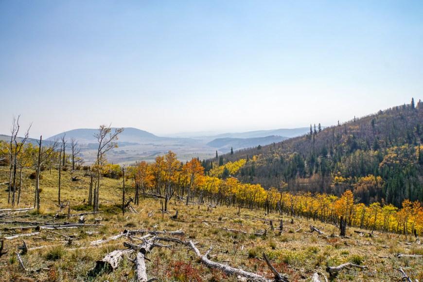views from sheep creek trail