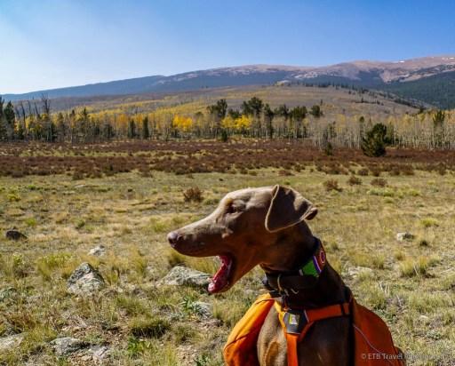 resting on sheep creek trail