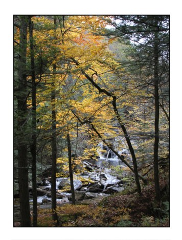 photographic note card, fall colors in connecticut