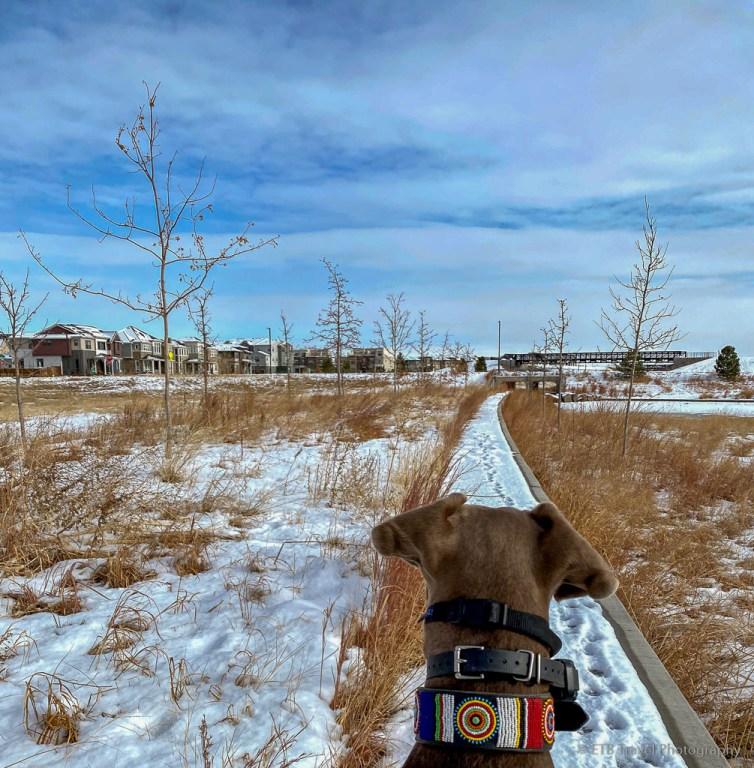 Prairie Basin Park
