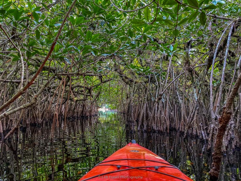 kayaking through the mangrove tunnels