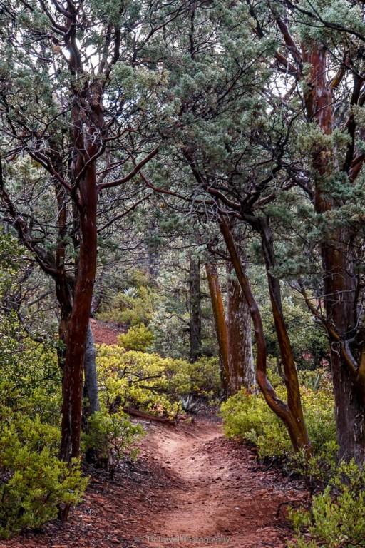 Jordan Trail in Sedona