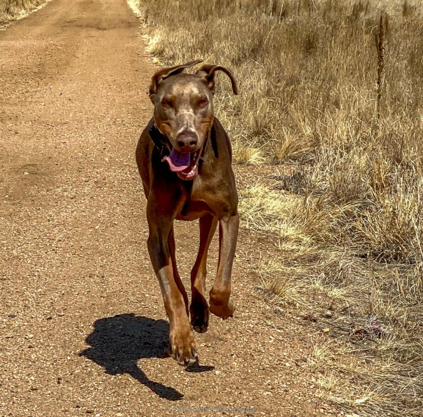 annie on perimeter trail at rocky mountain arsenal national wildlife refuge
