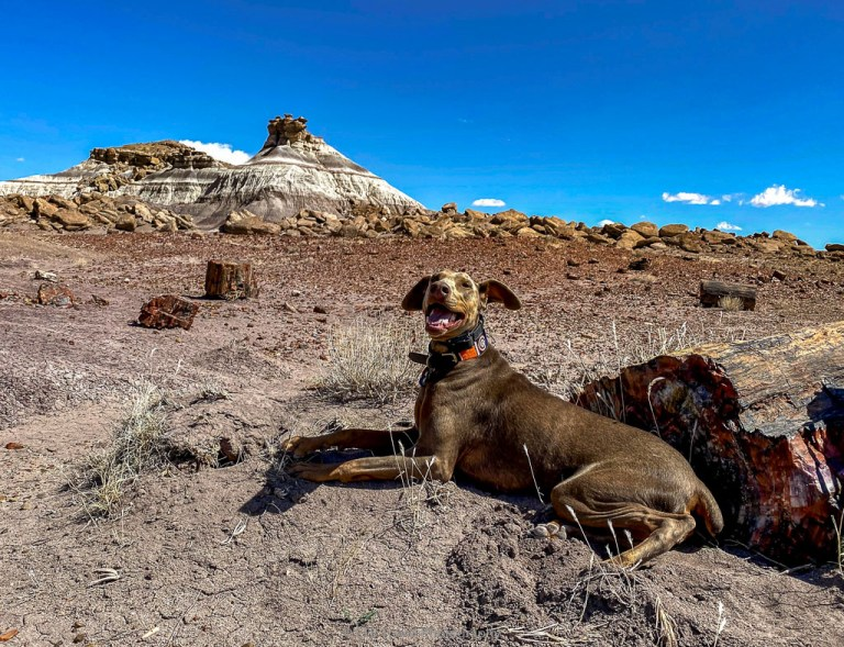 annie at petrified forest national park