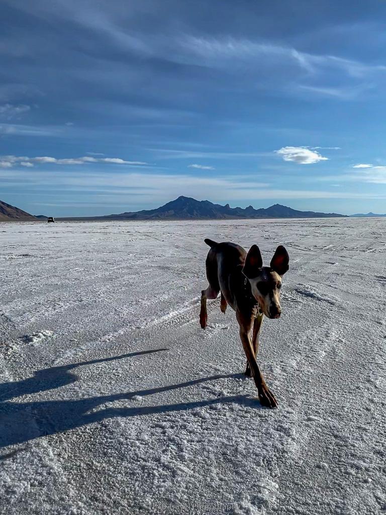 Annie racing on the Bonneville salt flats speedway