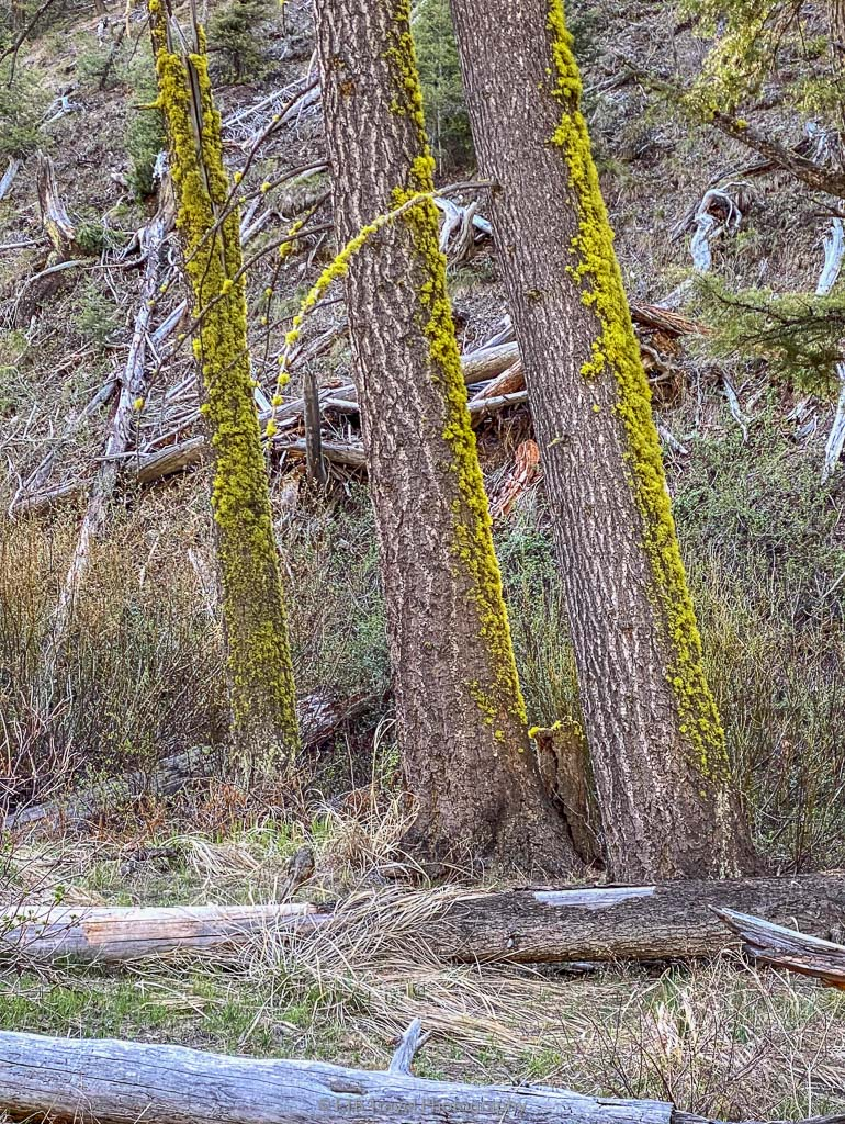 moss covered trees on murdock trail