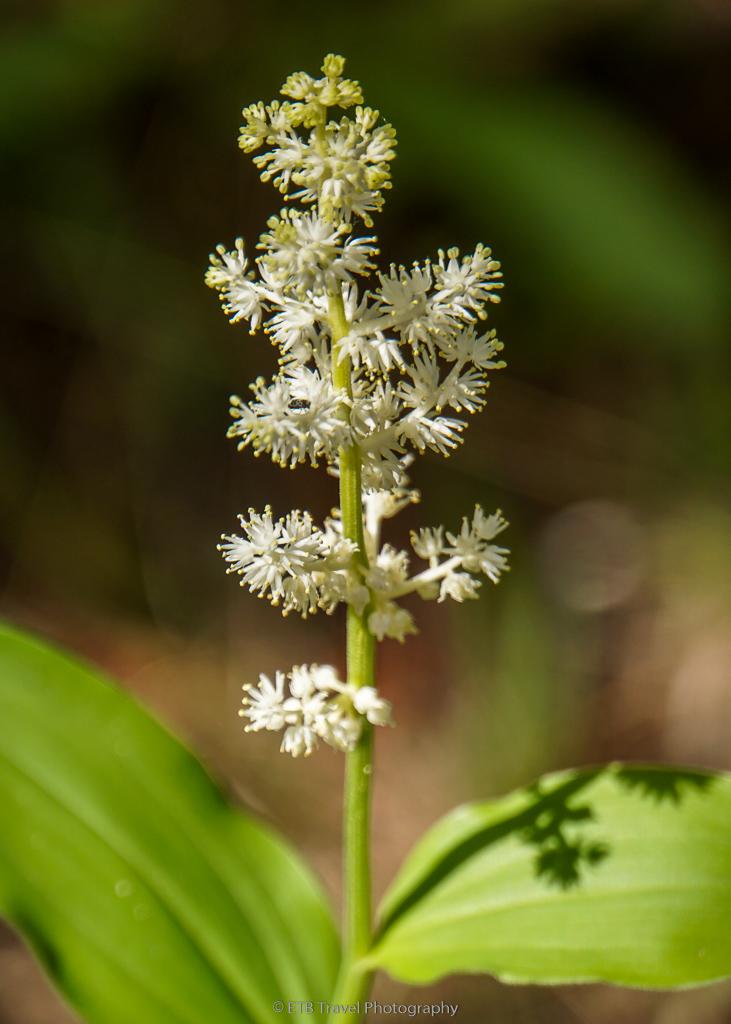 wildflower on hazard creek trail
