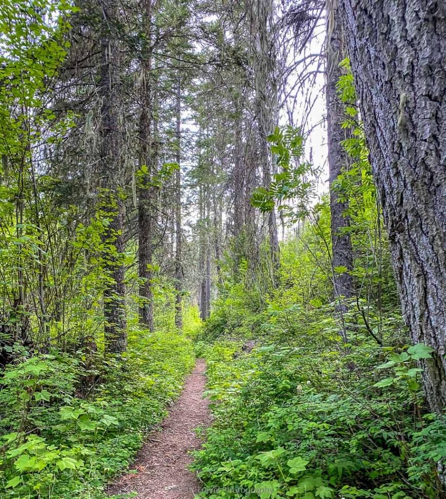 middle point hike near dayton