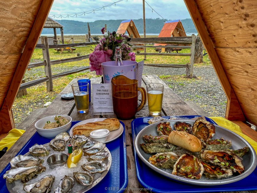 oysters at the hama hama on the olympic peninsula