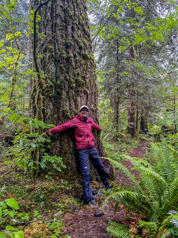 old growth forest at elk lake