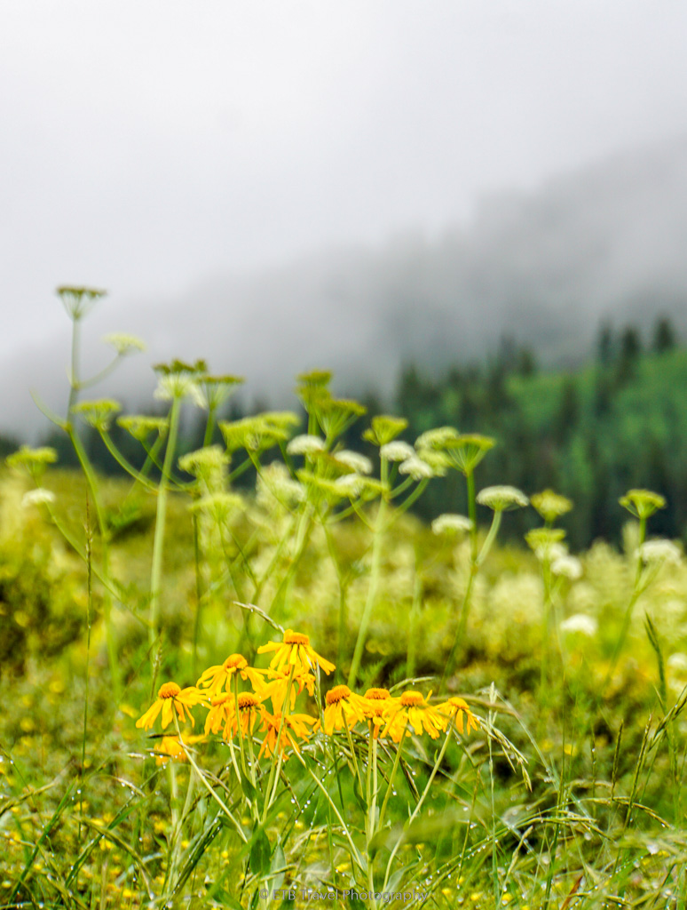 wildflowers in crested butte