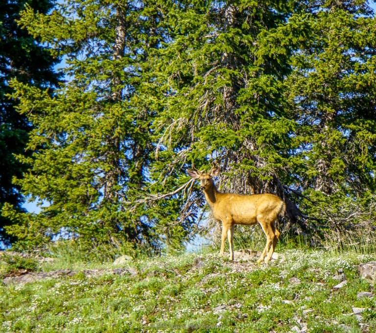 deer on scarp ridge trail