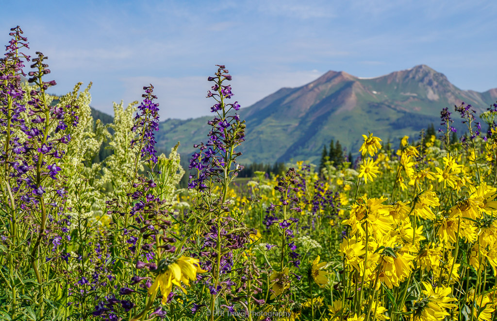 wildflowers on judd falls trail in crested butte
