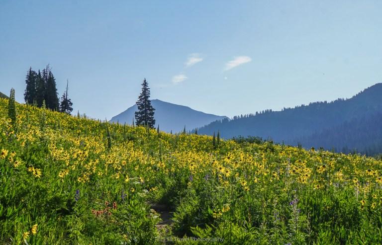 wildflowers on hasley basin loop