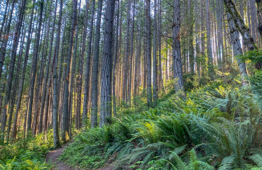 forest on oyster dome trail