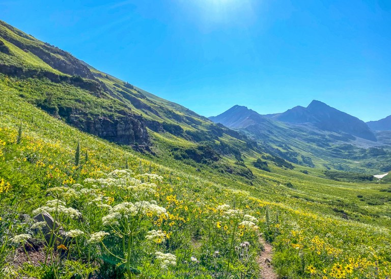 wildflowers on rustler's gulch trail