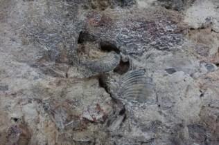 Exemple de mur coquillage - huile de baleine