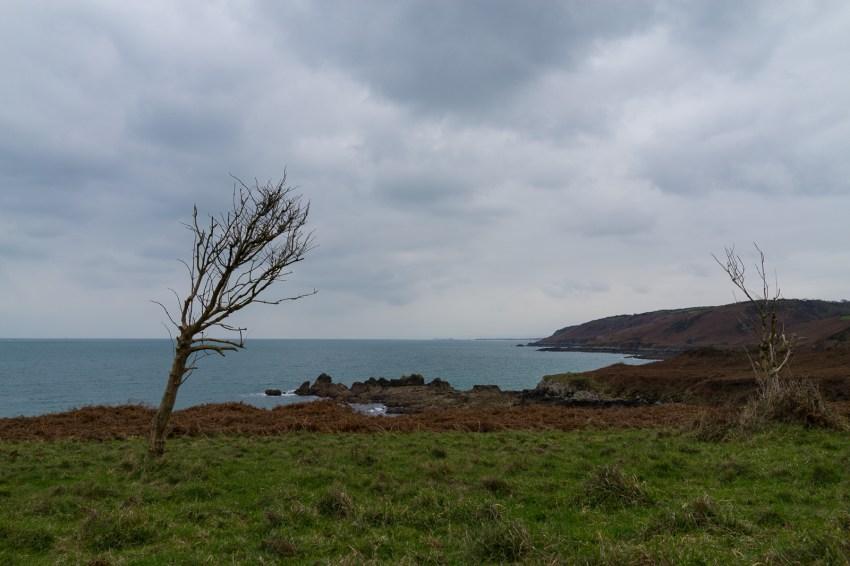 Un arbre bousculé par le vent du large.