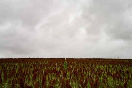 Champs céréalier de la ferme voisine