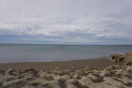 Une bande de cormorans en plein vol