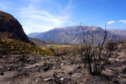 Sur l'une des terrasses du Canyon de Colca.