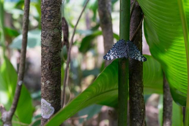 Un papillon d'Amazonie.