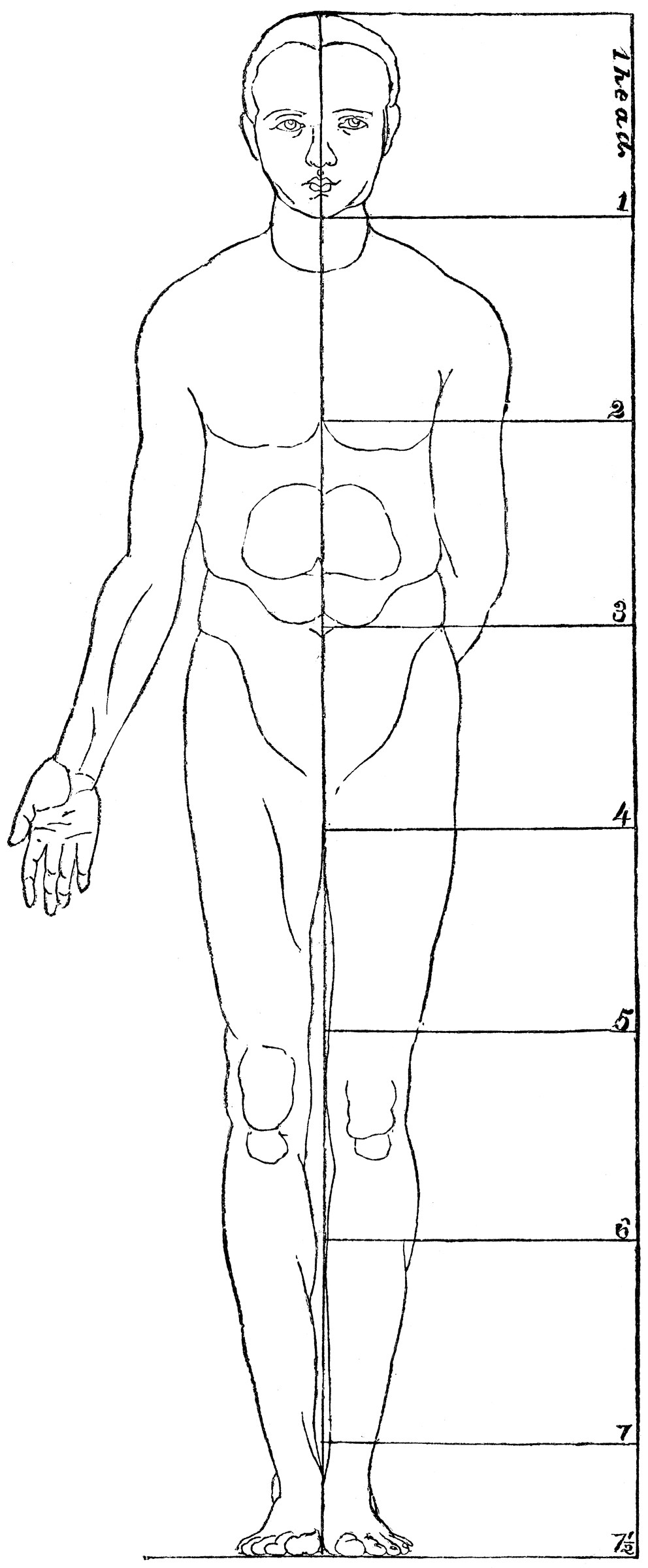 Body Perspective Clipart Etc