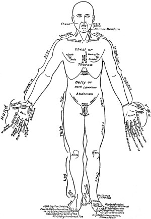 Front View of the Parts of the Human Body Labeled in