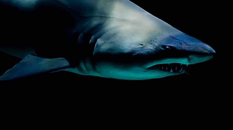 サメの急襲でシュノーケリング中の12歳少年とインストラクターが手脚を失う
