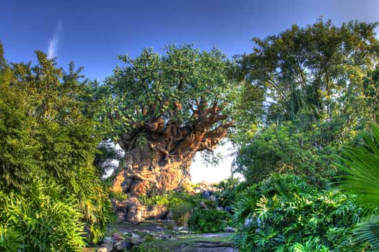 happy earth day birthday animal kingdom