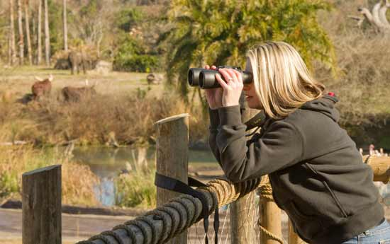 Guest viewing animals with binoculars.