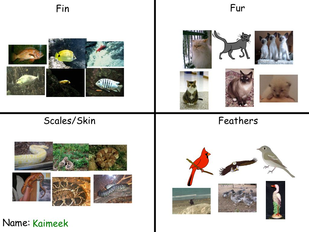 Coverings Of Animals