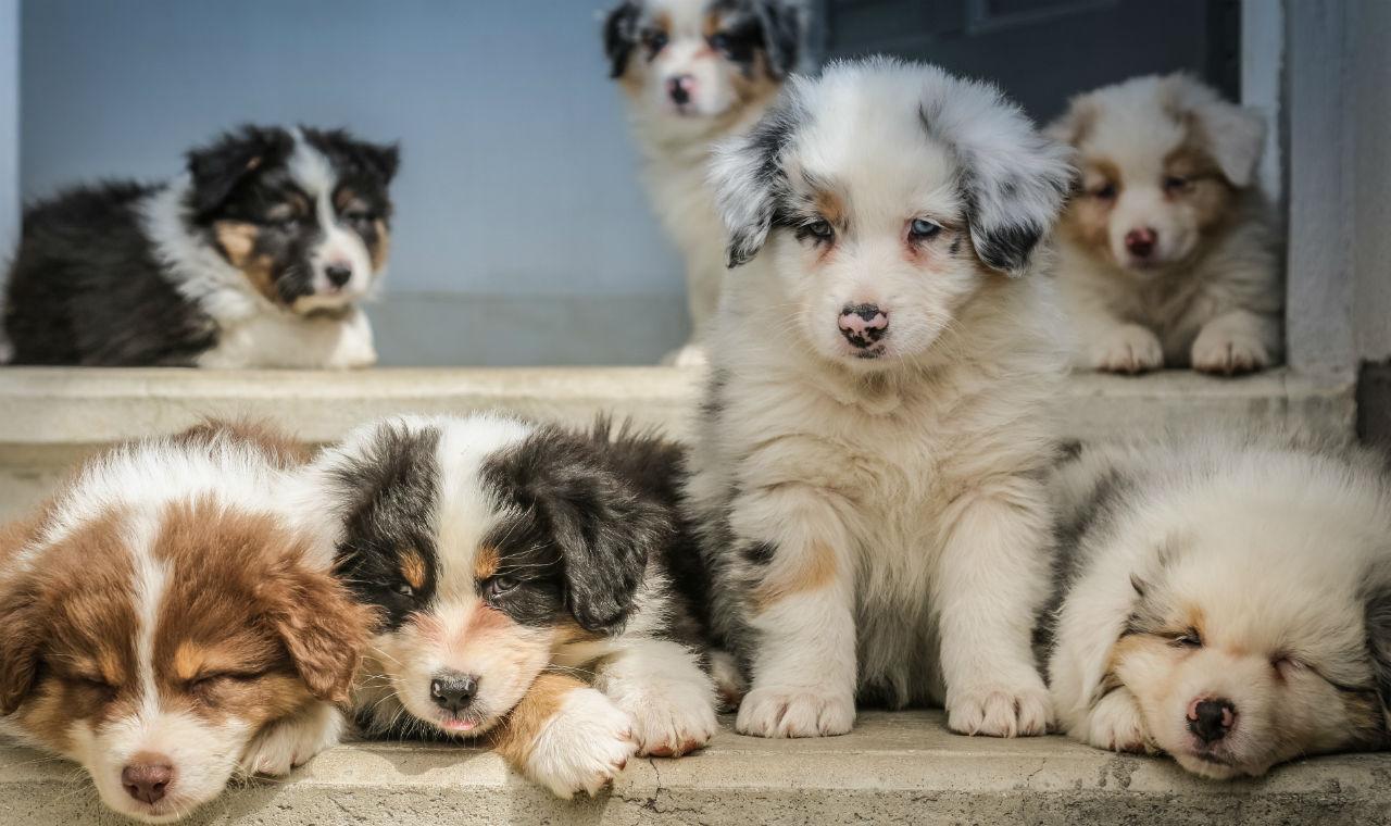 Checklist bij het aanschaffen van een puppy