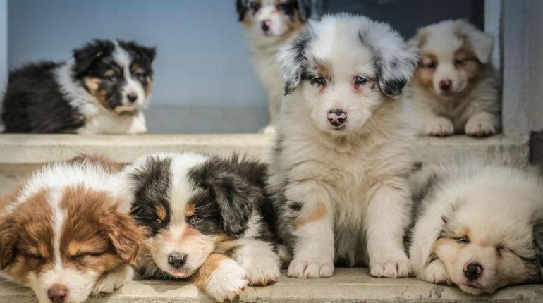 Checklist bij het aanschaffen van een puppy 1