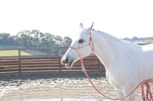白馬に乗った王子様