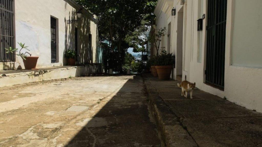 street cats Old San Juan