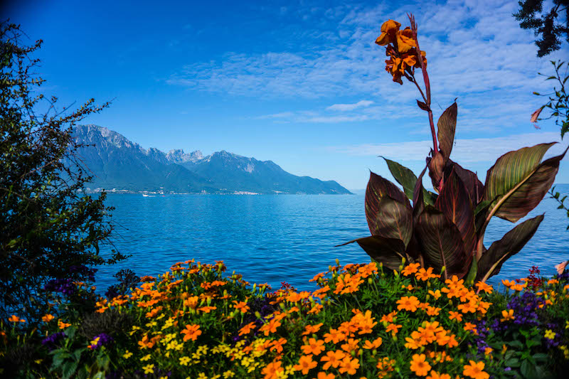 [orange flowers and blue lake, Montreux]