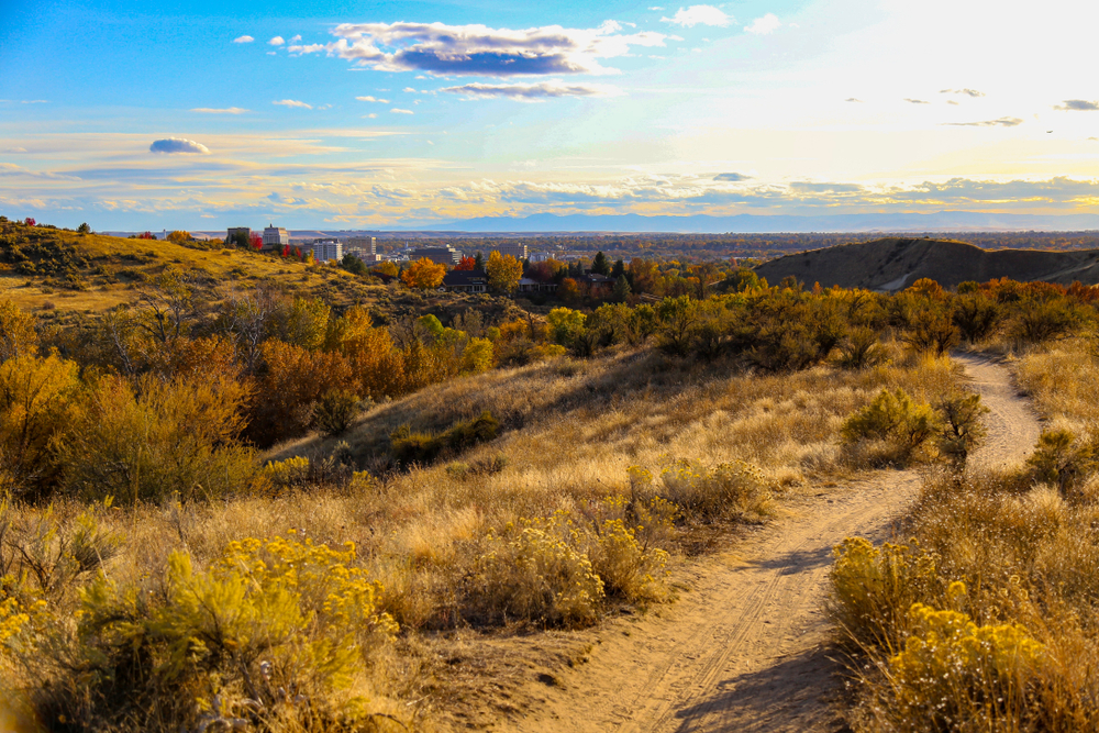 View of a hiking trail near Boise with lots of yellow grass and trees, in the distance you can see the buildings of the Boise skyline at sunset