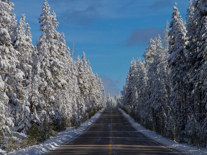 Paved road with snow covered trees in Yellowstone National Park