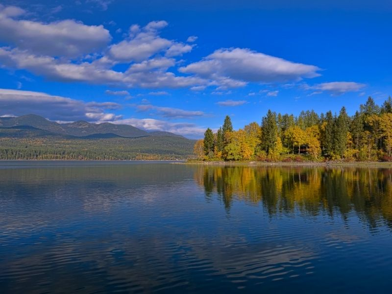 View of the lake of Whitefish with yellow and green pine trees in early autumn.