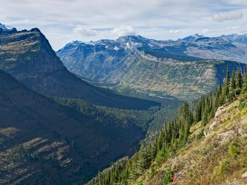 View from the Highline Trail over Glacier National Park's glacial mountains and valleys, covered in trees in the middle of summer with very little snow.