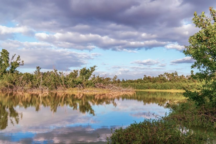 The still water of the swamp at Eco Pond mirroring the cloudy sky perfectly in the water.