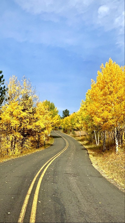 Yellow aspens on a mountain road