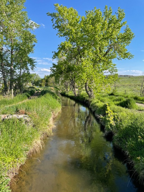 Green trees and an irrigation ditch in an open space in Colorado