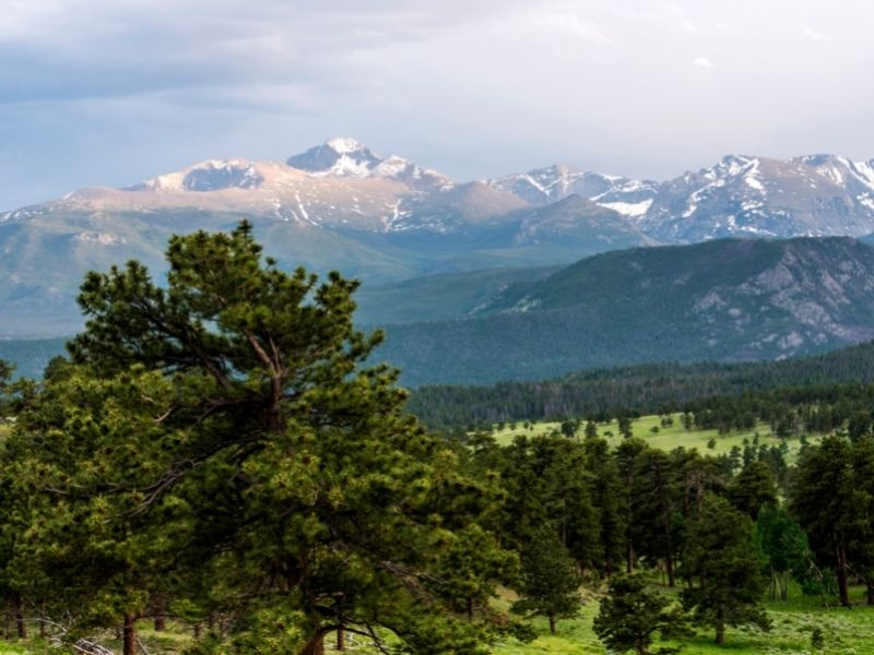 Trees and mountains at Beaver Meadows in RMNP