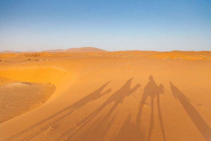 Camel shadow on the sand dune in Sahara Desert, Merzouga, Morocco