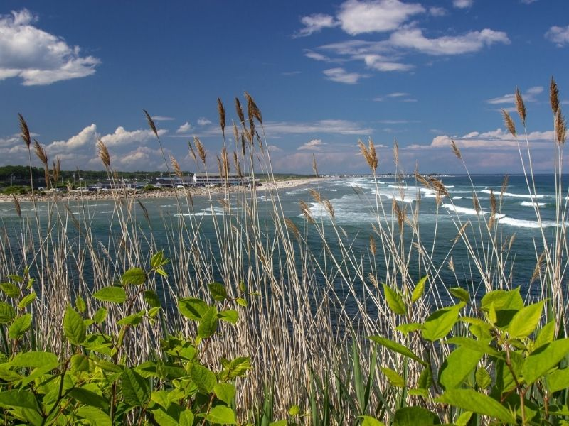 Coastline of Ogunquit with reeds and other plant life
