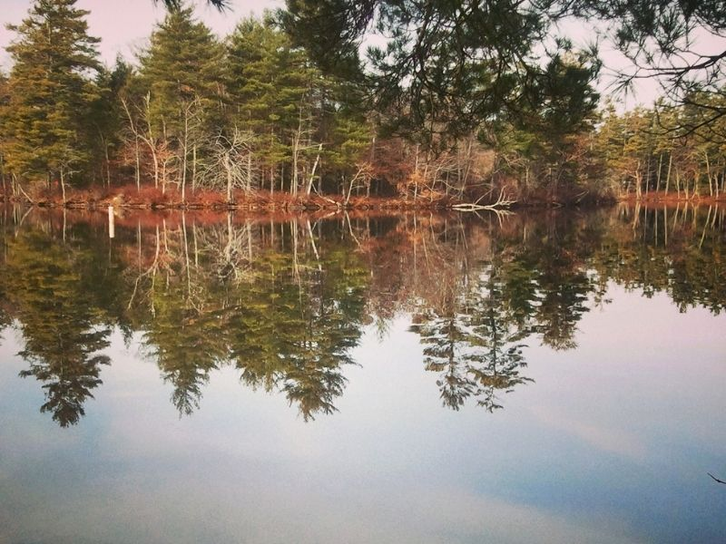Forest reflecting onto the waters of Lake Damariscotta on an overcast day