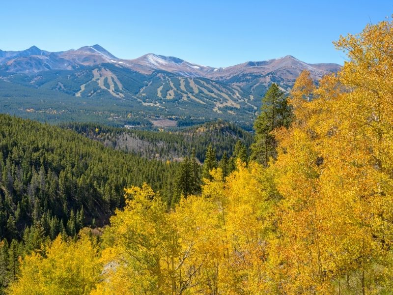 many evergreen trees in the mountains of breckenridge with visible ski runs in the distance and a cluster of yellow aspen trees in the foreground